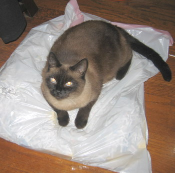shredder cat_1628.jpg