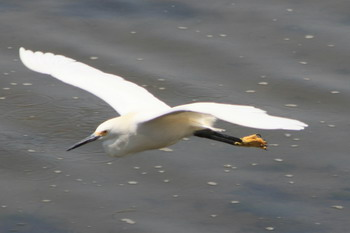 heron_flying_blog.jpg