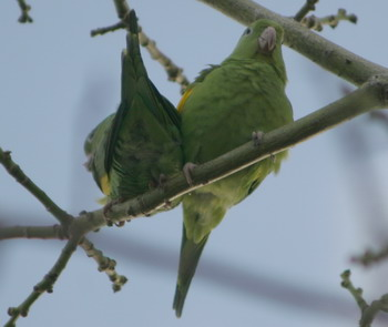 parrot_pair_blog-sized_3979.jpg