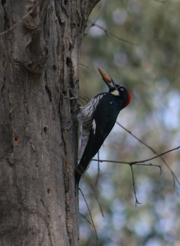 woodpecker-2-blog_1473